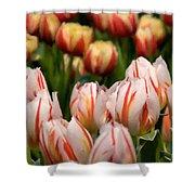 Tulips 31 Shower Curtain