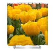 Tulips 29 Shower Curtain