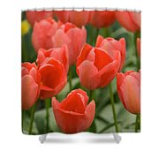Tulips 33 Shower Curtain