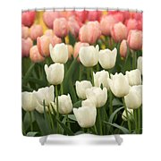Tulips 35 Shower Curtain