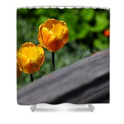 Tulips 5987 Shower Curtain