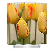 Tulips 6 Shower Curtain