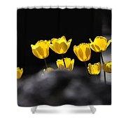 Tulips 6077 Shower Curtain
