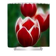 Tulips-6835-fractal Shower Curtain