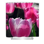 Tulips - Affectionately Yours 02 Shower Curtain