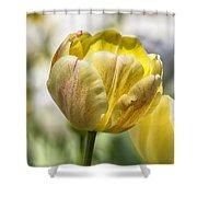 Tulips At Dallas Arboretum V27 Shower Curtain