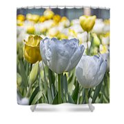 Tulips At Dallas Arboretum V28 Shower Curtain