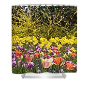 Tulips At Dallas Arboretum V32 Shower Curtain