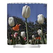 Tulips At Dallas Arboretum V36 Shower Curtain