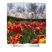 Tulips At Dallas Arboretum V39 Shower Curtain