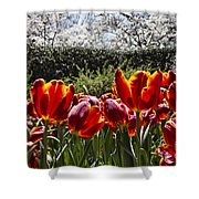 Tulips At Dallas Arboretum V41 Shower Curtain