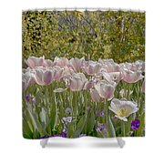 Tulips At Dallas Arboretum V45 Shower Curtain