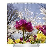 Tulips At Dallas Arboretum V46 Shower Curtain