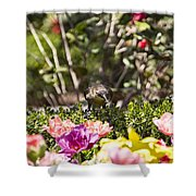 Tulips At Dallas Arboretum V47 Shower Curtain