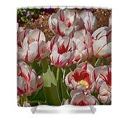 Tulips At Dallas Arboretum V53 Shower Curtain