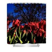 Tulips At Dallas Arboretum V63 Shower Curtain