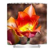 Tulips At Dallas Arboretum V64 Shower Curtain