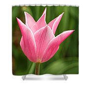 Tulips At Thanksgiving Point - 17 Shower Curtain