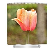 Tulips At Thanksgiving Point - 18 Shower Curtain