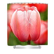 Tulips At Thanksgiving Point - 19 Shower Curtain