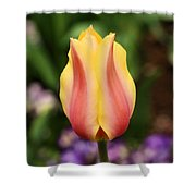 Tulips At Thanksgiving Point - 23 Shower Curtain