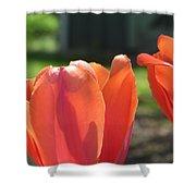 Tulips Backlit 2 Shower Curtain