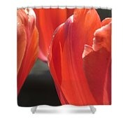 Tulips Backlit 5 Shower Curtain