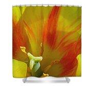 Tulips - Cheerful Energy 06 Shower Curtain