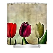 Tulips Color Shower Curtain