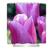 Tulips - Field With Love 05 Shower Curtain