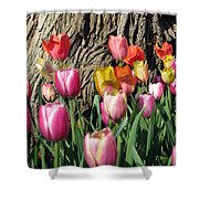 Tulips - Field With Love 07 Shower Curtain