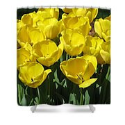 Tulips - Field With Love 18 Shower Curtain