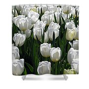 Tulips - Field With Love 19 Shower Curtain