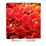 Tulips - Field With Love 28 Shower Curtain