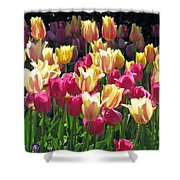 Tulips - Field With Love 35 Shower Curtain