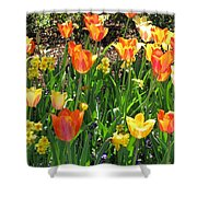 Tulips - Field With Love 41 Shower Curtain