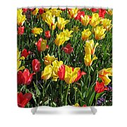 Tulips - Field With Love 49 Shower Curtain