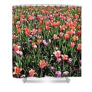 Tulips - Field With Love 55 Shower Curtain