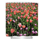 Tulips - Field With Love 56 Shower Curtain