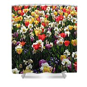 Tulips - Field With Love 57 Shower Curtain