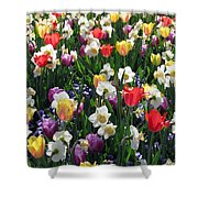Tulips - Field With Love 58 Shower Curtain