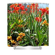 Tulips - Field With Love 64 Shower Curtain
