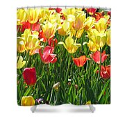 Tulips - Field With Love 65 Shower Curtain