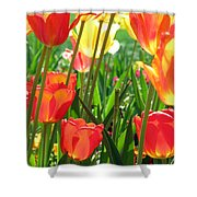 Tulips - Field With Love 69 Shower Curtain