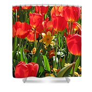 Tulips - Field With Love 71 Shower Curtain