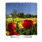 Tulips Galore  Shower Curtain