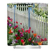 Tulips Garden Along White Picket Fence Shower Curtain