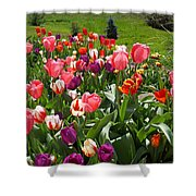 Tulips Garden Art Prints Colorful Spring Floral Shower Curtain