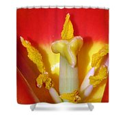 Tulips - Hearts Desire Shower Curtain