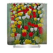 Tulips In A Field Shower Curtain